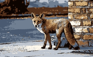 fox-in-the-streetfg
